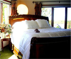 Soft Surroundings Silk Comforter (Silk inside and out) King Ivory Orig $549