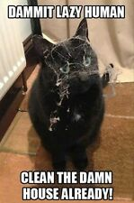 "FUNNY CAT MEME ""SPIDER WEB"" FRIDGE MAGNET 5' X 3.5'"