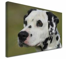 More details for dalmatian dog x-large 30