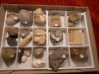 kleine Fossiliensammlung, 20 Stück