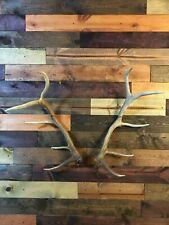 Amazeen Outdoors Elk Shed Antler Mount Hanger Moose Whitetail Sheds Bone Skull