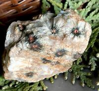 68.2g CURIOUS RAW ORBICULAR OCEAN JASPER CRYSTAL HEALING ROCK Reiki MADAGASCAR
