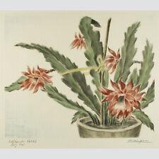 Adrianus van Zeegen: Blühender Kaktus. Kolorierte Radierung.