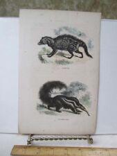 Vintage Print,Cirette,Anteater,Pa rish 19th Cent