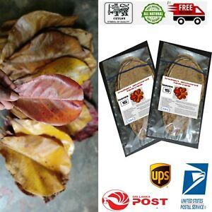 30pcs almond leaves catappa indian ketapang leaf shrimp betta fish aquarium care
