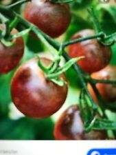 "20 graines de tomate "" Black cherry "" ( Bio Et Reproductible)"