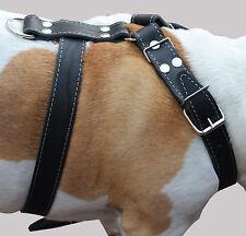 "Genuine Leather Dog Harness 30-35"" chest size Cane Corso German Shepherd Pitbull"