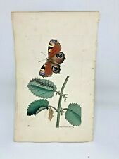 Peacock Butterfly - 1783 RARE SHAW & NODDER Hand Colored Copper Engraving