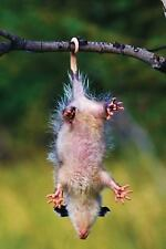 Playing Possum Journal, Paperback by N.d. Author Services (Cor), Isbn 1546975.