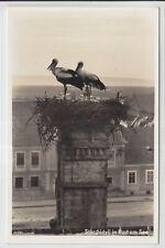 AK Rust am Neusiedlersee, Storchnest, Foto-AK 1939