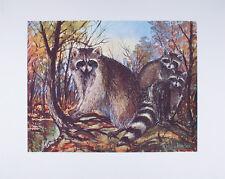 Vintage ART PRINT Raccoon Family W. HAROLD HANCOCK Wildlife 16x20 Mint Condition
