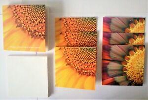 3 x Packs of Six Sunflower Notecards and Envelopes, Blank Inside