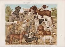 ca1890 DOGS DOG HUNTING Breeds J.BUNGARTZ Antique Chromolithograph Print