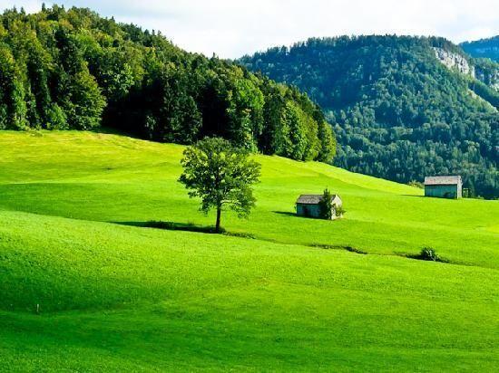 Emerald Glen