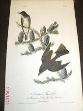 AUDUBON'S BIRDS of AMERICA - Plate 58 - COOPER'S FLYCATCHER