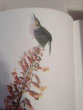 Carolina Wren John James Audubon Print Picture Plate Bird Birds Art