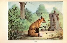 "1926 Vintage ANIMALS ""FOX"" GORGEOUS COLOR Art Print Plate Lithograph"