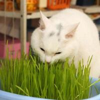 800PCS Cat Grass Seeds - Approx. 30 G/Bag (Grow Your Own) F7Q3