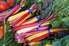 RAINBOW SILVERBEET SWISS CHARD SEEDS HARDY BEET VEGETABLE SEEDS