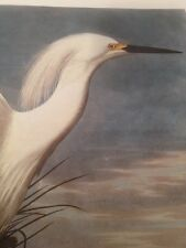 Snowy Egret Audubon Bird Print Picture Art