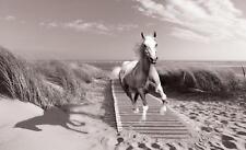 Vließ Fototapete Tapete Wandbild Pferd im Galopp am Strand 310229_VENMVT