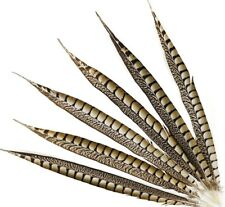 "25 Pcs LADY AMHERST PHEASANT Feathers 16-20"" Top Quality!! Craft/Hats/Costume"