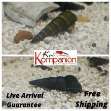 Assorted Rabbit Snails Algae Eaters Beginner KoiKompanion Free Shipping