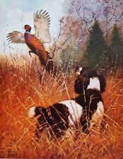 vintage art Hunting Spaniel Bird Dog with Ring-Neck Pheasant by Lynn Bogue Hunt