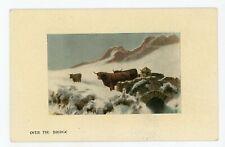 Highland Cattle crossing Bridge Scotland UK 1910 Valentine Postcard