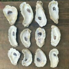 """Oyster Shells 