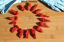 15 Bhut Jolokia Ghost Pepper Samen +15 Getrocknete Hälften + 1 x Handschuhe