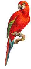 """SHIP FROM NY - Temporary Tattoo -  Set of 2  Parrot (2"""" each)"""
