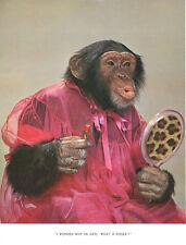 1 Vintage Art Photo Page  Chimp Chat Book 1960's Chimpanzee Lipstick Beauty Lip