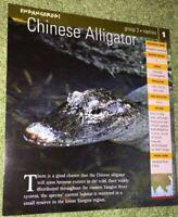 Endangered Species Animal Card - Birds - Chinese Alligator #1