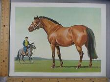 Rare Original VTG Asian Horse Equestrian Sam Savitt Color Illustration Art Print