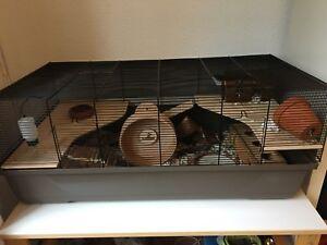 Hamster Käfig komplett, sehr tiergerecht, schön, neues Rodipet Rad, vieles mehr