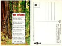 Vintage Postcard California The Redwoods Giant Sequoia Unposted 1Z