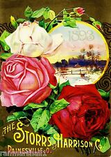 1893 Spring Roses Vintage Flowers Seed Packet Catalogue Advertisement Poster
