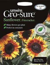 Unwins Pictorial Packet - Flower - Sunflower Firecracker F1 - 12 Seeds