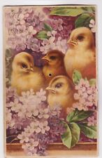RARE ca1910  SQUEAKY CHICKS POSTCARD NOVELTY MADE IN GERMANY DRGM 336952 SCARCE