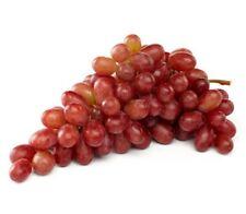 CRIMSON SEEDLESS Grapes VitIs vinifera vine fruit plant as bagged rootstock