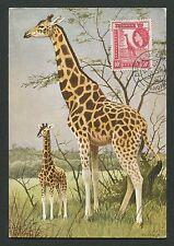 KENYA/UGANDA MK 1957 FAUNA GIRAFFE MAXIMUMKARTE CARTE MAXIMUM CARD MC CM d1943