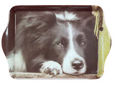 Border Collie Breed of Dog Small Melamine Snack Trinket Tray 21x14cm Ideal Gift