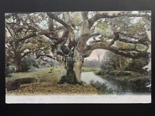 Hampshire NEW FOREST Queenwood Bower - On the Stream c1907 by F.G.O. Stuart 1128
