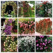 450 Pcs Climbing Roses Seeds,,9 Species Variety, Each Of Variety 50 Pieces