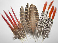 12  Large Natural  Pheasant quill feathers Country Collection + 15 Small ones