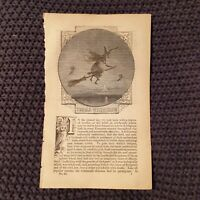 The Old Witchcrafts - c.1852 Book Page