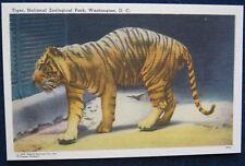 Tiger National Zoological Park Washington DC Linen Unposted