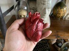 Cabinet de curiosités Oddities Coeur anatomique humain rouge sang