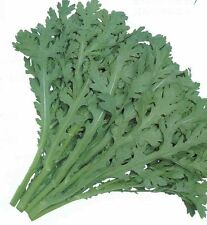 80 graines de LAITUE CHRYSANTHEME(Glebionis Coronaria)H848 CHOPSUEY GREENS SEEDS